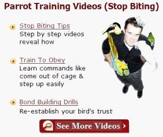 parrot training videos