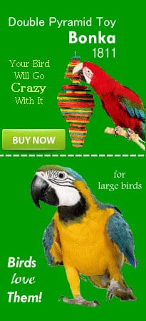 bird toy banner rightb