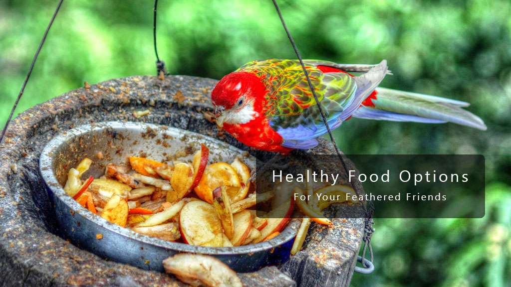 Healthy Food Options For Your Parrot