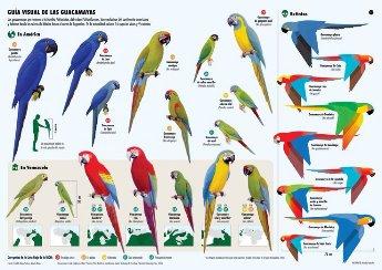 parrot types