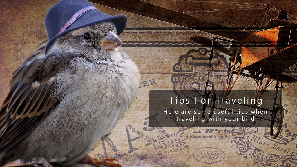 7 Tips For Traveling with Your Parrot