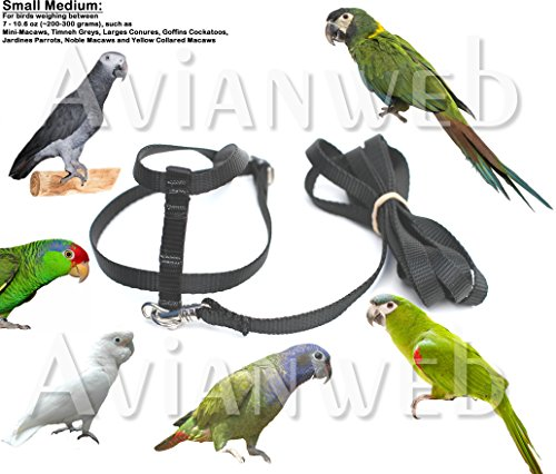 Fred Bird Harness with 6 Foot Leash Made in the USA with Quality and Safety in Mind 0 fred bird harness with 6 foot leash made in the usa with quality